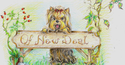 Of New Deal yorkshire terrier kennel